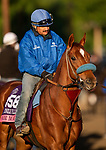 OCT 29: Breeders' Cup Juvenile Turf Sprint entrant Fair Maiden, trained by Eoin G. Harty,  at Santa Anita Park in Arcadia, California on Oct 29, 2019. Evers/Eclipse Sportswire/Breeders' Cup