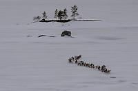 Finland-Arctic 2015