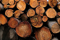 Pile of cut logs, Corsica, France.