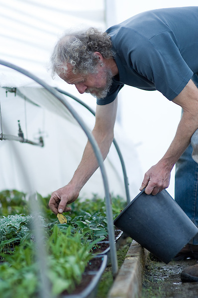 Portraits of Nick working in the Polytunnel with Cornus