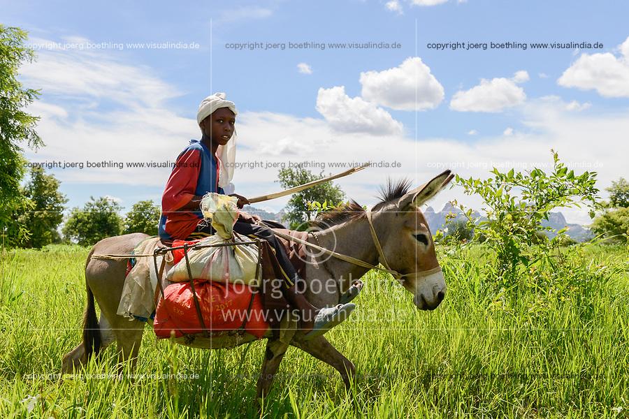 CHAD, Guéra, Bitkine, transport with donkey / TSCHAD , Guéra, Bitkine, Dorf Tchelmé, Transport mit Esel