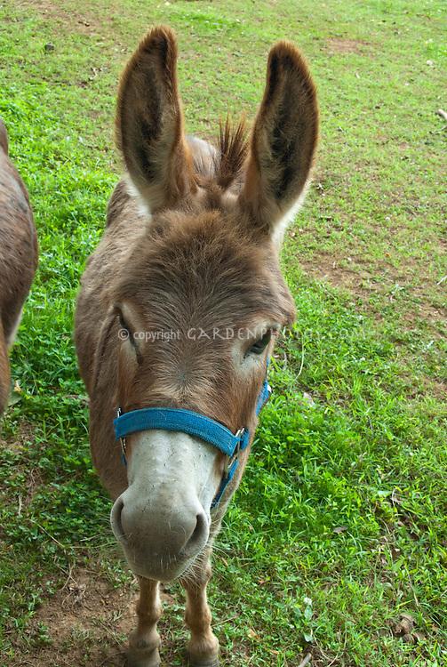 Donkey in meadow behind fence on farm