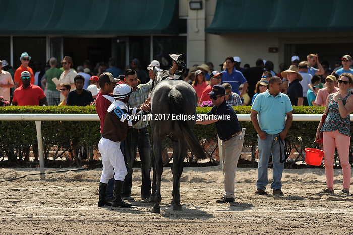 HALLANDALE BEACH, FL - APRIL 01: Taperge with Joel Rosario aboard finish 3rd in the Sanibel Island Stakes on Florida Derby Day at Gulfstream Park on April 01, 2017 in Hallandale Beach, Florida. (Photo by Carson Dennis/Eclipse Sportswire/Getty Images)