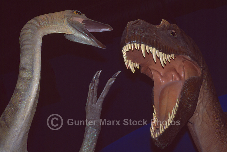 Struthiomimus and Tyrannosaurus Rex Dinosaur Models on Display in Museum Exhibit, Prince George, BC, British Columbia, Canada