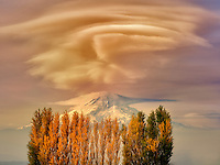 Mt. Hood and fall colored Cottonwood trees. Columbia River Gorge Natioanl Scenic Area, Washington