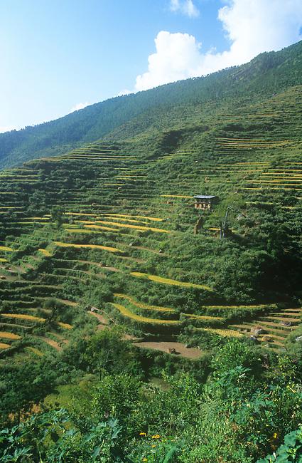 Terraces, Bhutan