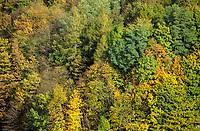 DEUTSCHLAND, Wald, Mischwald, Baumkronen im Herbst