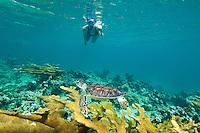 Julie Mozeika snorkeling with a young hawksbill turtle.Hawksnest Bay, ST John.Virgin Islands National Park