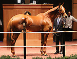 Hip #6 Pachattack consigned by Cara Bloodstock (Bernard McCormach) sold for $1,200,000 to Flaxman Holdings at the Fasig Tipton November Sale on November 06, 2011.