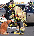 Eighth District Fire Department Lt. Chris Buechele, comforts Claudia after the dog was removed from a car involved in a two vehicle accident, as one of the injured is removed, Monday, March 28, 2011, on Broad Street in Manchester. The accident happened at 2:40 at the intersection with Oliver Road. Three people were injured all minor including Claudia's owner who walked to a stretcher to be checked out at the hospital.  The dog was not injured and was transported from the scene by an unidentified woman. (Jim Michaud/Journal Inquirer)