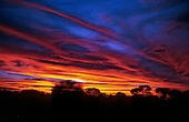 Northern Territory, Australia. Sunset over shrubland of Red Centre with a spectacular purple and gold sky.