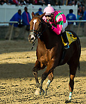 LAUREL, MARYLAND - OCTOBER 22: Admiral's War Chest #4, ridden by Taylor Hole, wins the Maryland Million Classic on Maryland Million Day at Laurel Park on October 22, 2016 in Laurel, Maryland. (Photo by Scott Serio/Eclipse Sportswire/Getty Images)