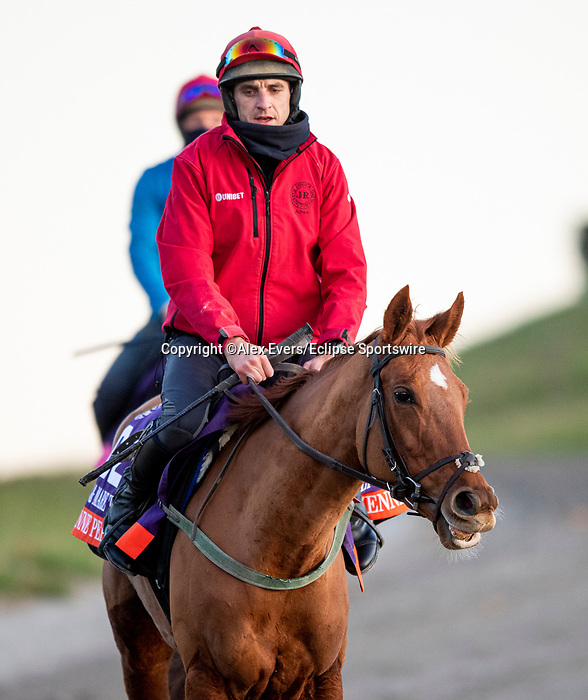 November 3, 2020: Cayenne Pepper, trained by trainer Mrs. John Harrington, exercises in preparation for the Breeders' Cup Filly & Mare Turf at Keeneland Racetrack in Lexington, Kentucky on November 3, 2020. Alex Evers/Eclipse Sportswire/Breeders Cup