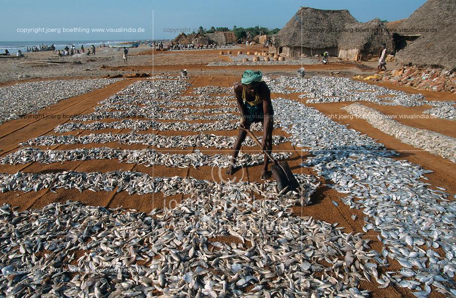 INDIA, Nagapattinam, coast fisherman dry fish in the sun at the beach /  INDIEN Nagapattinam, Küstenfischer trocknen Fisch am Strand