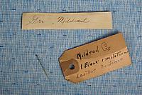 Mildred G
