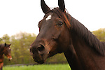 A HORSE AT SPRINGDALE FARM IN PENNSYLVANIA