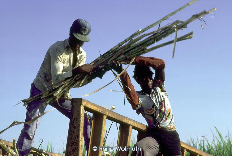 Haitian canecutters load a sugar train  on a  plantation in La Romana
