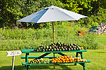 A backyard farmstand on the Lake Champlain Islands, South Hero, VT, USA