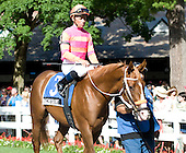 Can Nacho Saint pull off an upset in Saturday's Gotham Stakes for trainer Kelly Breen?