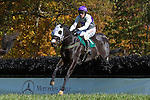 07 November2010: Expel and Paddy Merrigan win the Madison Plate at Montpelier Hunt Races in Montpelier Station, Va. Expel is owned by Northfield Farm and trained by Edward Mulligan.      Susan M. Carter/Eclipse Sportswire