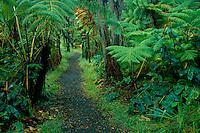Hapu'u tree ferns and ohia-lehua trees<br /> Kilauea Iki Trail<br /> Hawaii Volcanoes National Park<br /> Island of Hawaii,  Hawaii