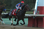 HOT SPRINGS, AR - FEBRUARY 15: American Dubai #1, with jockey Walter De La Cruz in the Southwest Stakes at Oaklawn Park on February 15, 2016 in Hot Springs, Arkansas. (Photo by Justin Manning/Eclipse Sportswire/Getty Images)