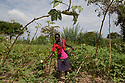 Uganda - Palorinya Refugee Camp - Jacqueline picks vegetables in the field that surrounds her hut. Jacqueline Kaluma, 17, lives with her 14-year-old brother in an orphanage in Palorinya refugee settlement. The two orphans arrived in the camp on February 2017, after a two-day-march from their village of Loa, in South Sudan. While her brother is now attending primary school, Kaluma cannot continue her studies, as aid agencies have not yet set up free secondary schools due to lack of funding. Kaluma is trying to raise enough money for her tuition fees by fetching water for other families.