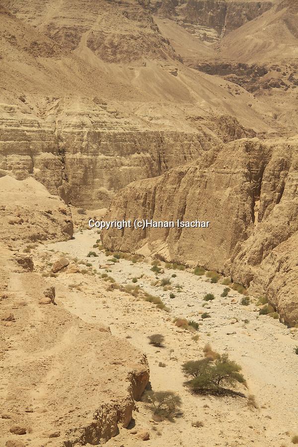 Israel, Wadi Zeelim in the Judean desert