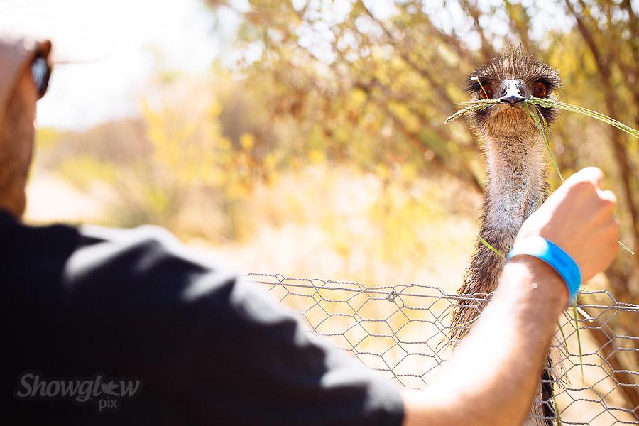 Image Ref: CA565<br /> Location: Desert Park, Alice Springs<br /> Date of Shot: 17.09.18