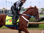 April 26, 2015 Kentucky Derby and Oaks workouts, Churchill Downs.  Bold Conquest (rider Abel Flores), owner Ackerley Brothers Farm, trainer Steve Asmussen. By Curlin x One For Jim (Distorted Humor) ©Mary M. Meek/ESW/CSM