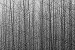 Northwest Tree Collection