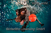 REALISTIC ANIMALS, REALISTISCHE TIERE, ANIMALES REALISTICOS, dogs, paintings+++++SethC_320B1178rev,USLGSC04,#A#, EVERYDAY ,underwater dogs,photos,fotos ,Seth