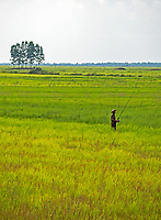 A lone tree and fisherman in the rice fields on the road between Siem Reap and Battambang the agriculture region of Cambodia