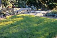 Blue Grama Grass-Bouteloua gracilis (Drought tolerant lawn)
