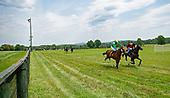 1st Virginia Equine Alliance Maiden Hurdle - Emerald Rocket