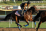 ARCADIA, CA  OCTOBER 25: Breeders' Cup Juvenile Fillies entrant Bast, trained by Bob Baffert, exercises in preparation for the Breeders' Cup World Championships at Santa Anita Park in Arcadia, California on October 25, 2019. (Photo by Casey Phillips/Eclipse Sportswire/CSM)
