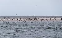 Vögel und Heuler auf der Sandbank vor Juist - Norddeich 23.07.2020: Fahrt mit der Nordmeer zu den Seehundbänken