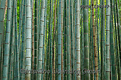 Tom Mackie, LANDSCAPES, LANDSCHAFTEN, PAISAJES, photos,+Asia, Japan, Japanese, Kyoto, Tom Mackie, Worldwide, bamboo, environment, environmental, forest, horizontal, horizontals, nat+ural landscape, nobody, pattern, patterns, woodland, world wide, world-wide,Asia, Japan, Japanese, Kyoto, Tom Mackie, Worldwi+de, bamboo, environment, environmental, forest, horizontal, horizontals, natural landscape, nobody, pattern, patterns, woodla+nd, world wide, world-wide+,GBTM190647-1,#l#, EVERYDAY