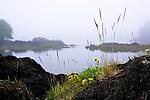 View of cove from trail in He-Tin-Kis Park along the Wild Pacific Trail along cliffs  near the fishing town of Ucluelet, British Columbia and Pacific Rim National Park, Canada.  Ucluelet is at the south end of Pacific Rim National Park
