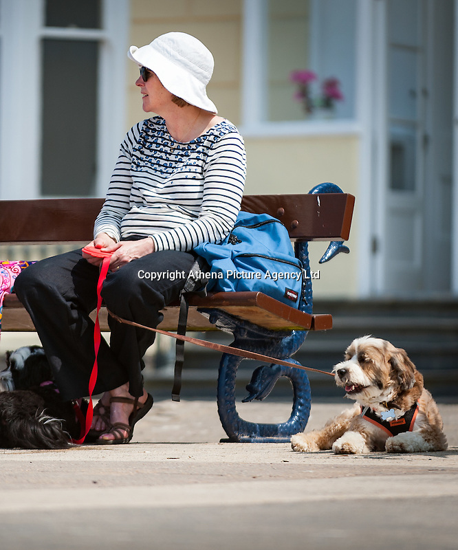 HOT WEATHER WALES Aberystwyth, Ceredigion, West Wales. UK Weather Wednesday  8th June 2016: With yellow warnings for rain across swathes of England the sun comes out at lunchtime with temperatures reaching 19 degrees Celsius after a dull morning. Two ladies take a break from their walk to rest with their dogs.