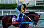 October 27, 2019 : Breeders' Cup Sprint entrant Engage, trained by Steven M. Asmussen, exercises in preparation for the Breeders' Cup World Championships at Santa Anita Park in Arcadia, California on October 27, 2019. John Voorhees/Eclipse Sportswire/Breeders' Cup/CSM