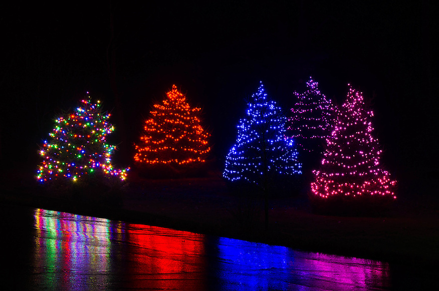 This grouping of lit Christmas trees made for a riot of color on a rainy, dark winter night.