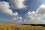 Israel, Shephelah region. Fields by route 353