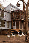 January 2, 2013. Pittsboro, North Carolina.. Rescued geese walk under one of the decks of the Scarpa home.. Siglinda Scarpa, originally from northern Italy, runs the Goathouse Refuge, a no kill shelter for cats. Scarpa, who is also a ceramic artist, runs the shelter with 5 full time employees and currently has over 260 cats in the refuge..