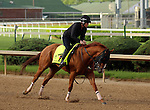 LOUISVILLE, KY - MAY 02:  Whitmore (Pleasantly Perfect x Melody's Spirit, by Scat Daddy) gallops at Churchill Downs, Louisville KY with exercise rider Laura Moquett. He is pointed toward the Kentucky Derby. Owner Robert V. LaPenta, Harry T. Rosenblum, and Southern Springs Stables, trainer Ron Moquett. (Photo by Mary M. Meek/Eclipse Sportswire/Getty Images)