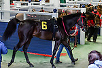 February 27, 2021 #6, Woodhouse in the paddock for the Southwest Stakes (Grade III) at Oaklawn Racing Casino Resort in Hot Springs, Arkansas. Ted McClenning/Eclipse Sportswire/CSM