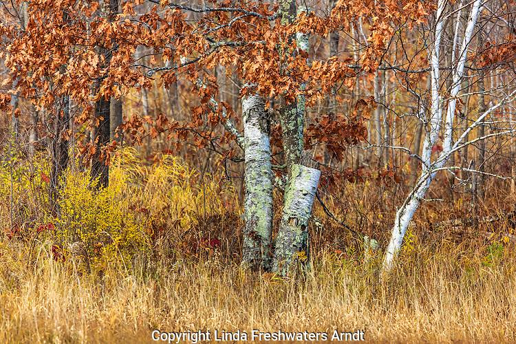 Autumn in northern Wisconsin