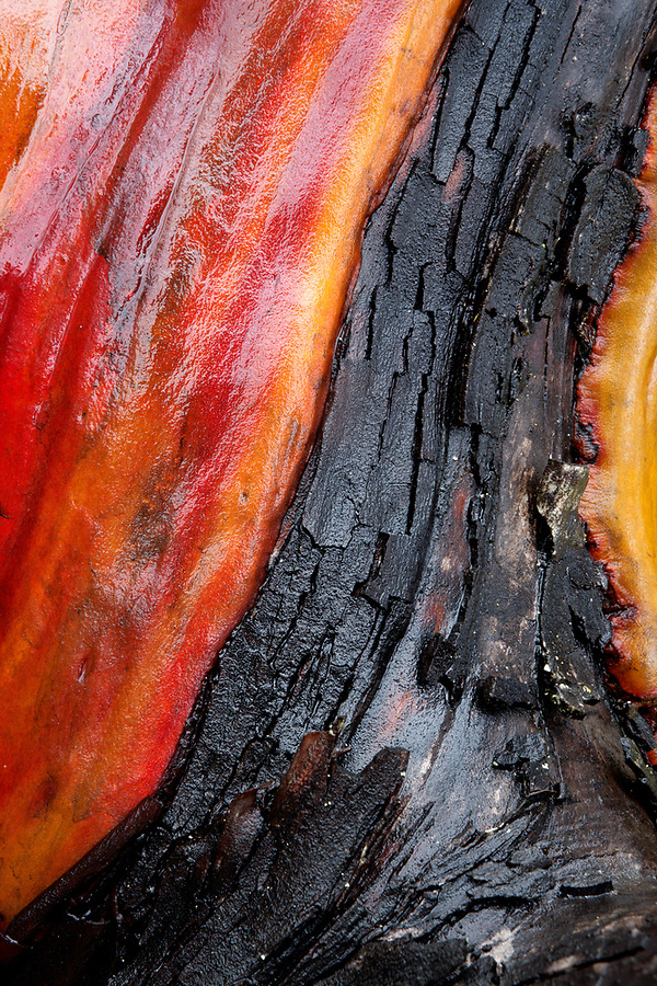 Close-up of Pacific madrone (Arbutus menziesii) tree bark with red orange and black hues and smooth and rough textures, Washington Park, Anacortes, Washington