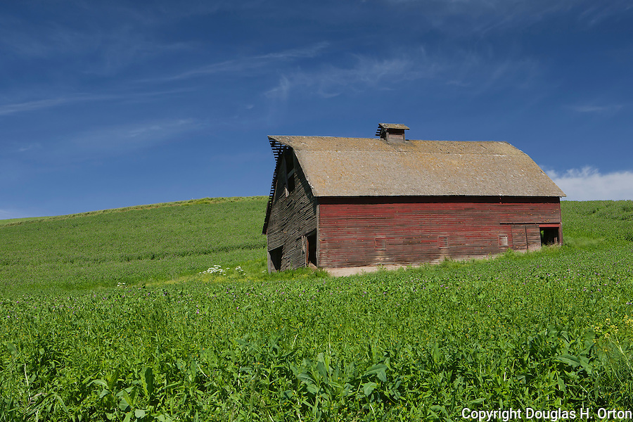An aging red barn, still in use, sits amid lentil fields near the south fork of the Palouse River, Washington.