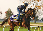Dayoutoftheoffice, trained by trainer Timothy E. Hamm, exercises in preparation for the Breeders' Cup Juvenile Fillies at Keeneland Racetrack in Lexington, Kentucky on November 1, 2020. /CSM